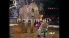 Elefant rasiert DDR Star, 1982
