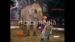 Elephant shaves GDR celebrity, 1982