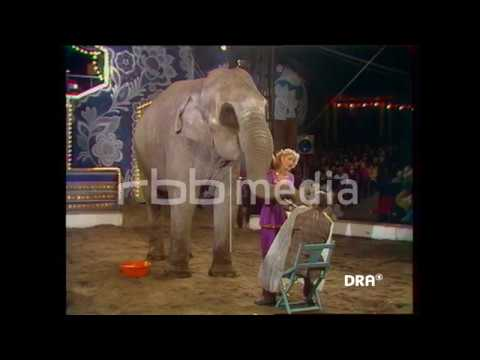 Elefant rasiert DDR Star, 1982